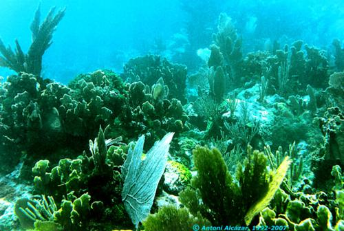 Underwater Landscape in Christ of Deep, Florida